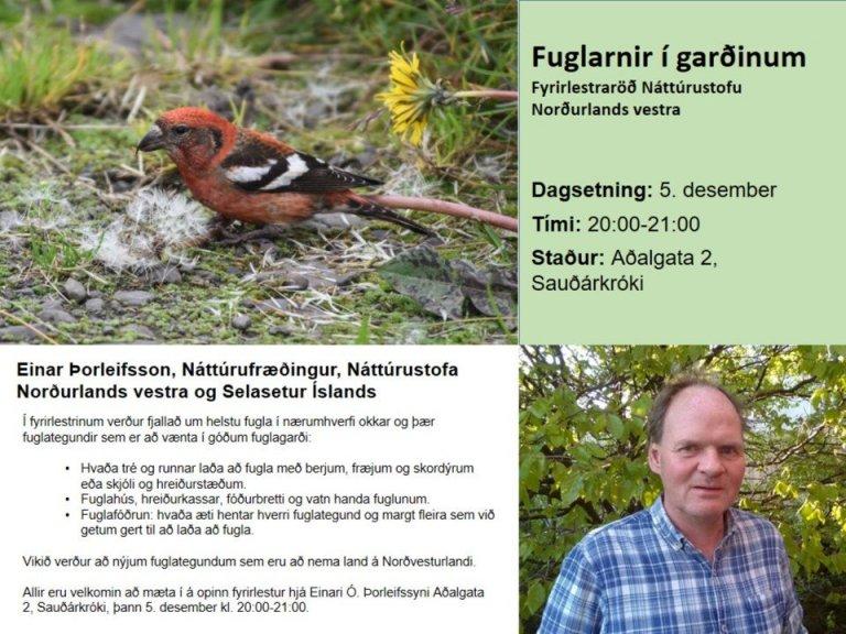 Fuglarnir í garðinum - fyrirlestur á Sauðárkróki 5. desember